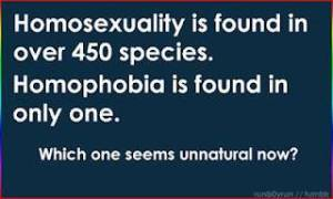 Optimized-homophobia_only_one