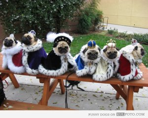 Pug Royalty Group Shots