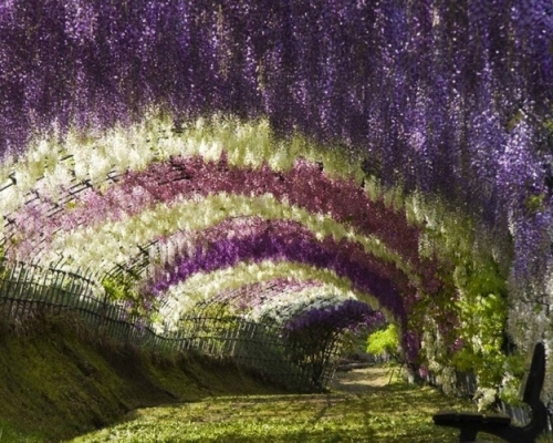 Wisteria Garden in Japan from inthralld.com